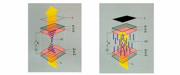 TN - Twisted Nematic Panels